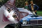 Автомобили с кошачьими именами