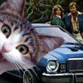 автомобили кошки